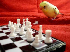 Pensive Parakeet